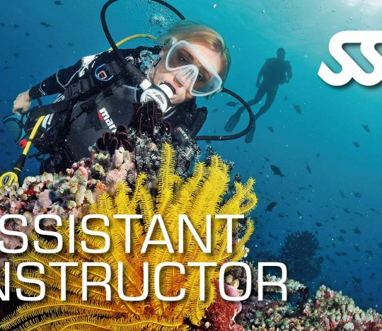 ASSISTANT INSTRUCTOR & INSTRUCTOR TRAINING COURSE